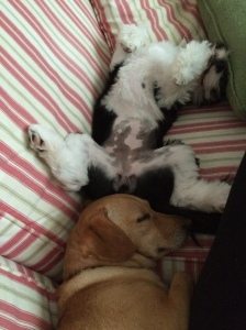 The golden one is Zoe and she's my baby. The spazzy one is Millie...why the picture of the dogs? Well, why not?